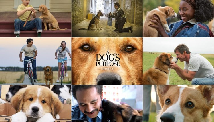"A Dog's Purpose  :: รักแท้ของ ""หมา"" ยาวนานเสมอ ::"